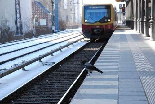 S Bahn Bird Public Means Of Transport Rail S Bahn