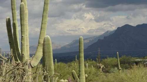 Saguaro Arizona Landscape Cacti Sky Rainstorm