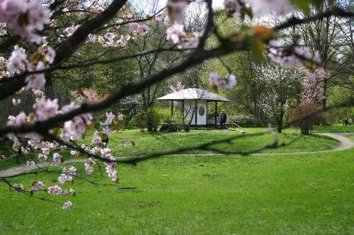 Sakura Tree Bloom Pink Gazebo
