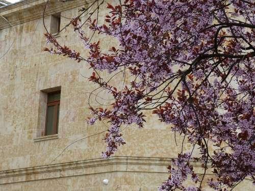Salamanca Spain Spring Tree Blossom Bloom