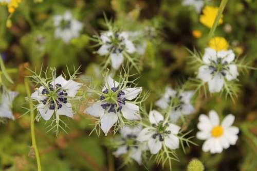 Salento Flowers Magliano