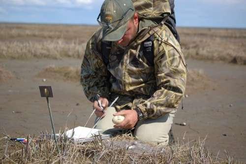 Sampling Influenza Avian Medical Science
