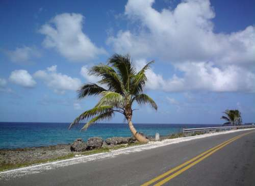 San Andrés Colombia Palm Tree Beach Landscape
