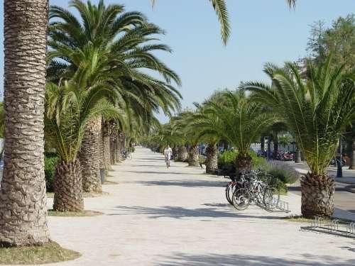 San Benedetto Del Tronto Promenade Palm