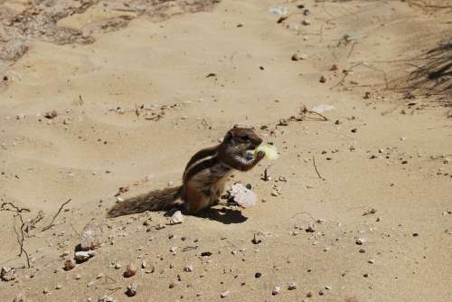 Sand The Squirrel Animal Mammal Eat Nutrition