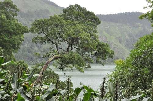 Sao Miguel Azores Tree Island Water Landscape