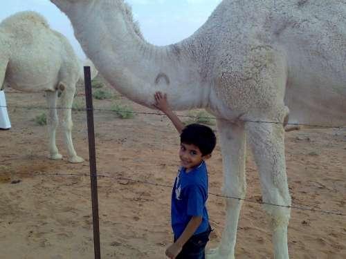 Saudi Arabia Camel Boy