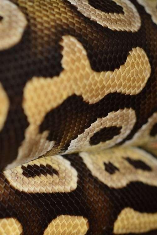 Scale Reptile Terrarium Animal Creature Snake