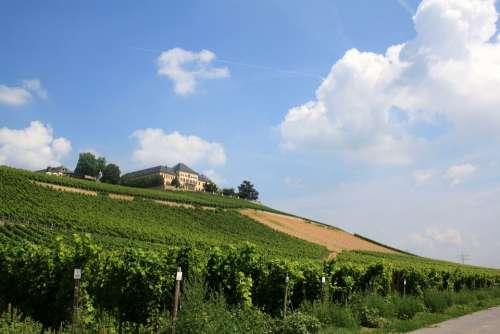 Schloss Johannisberg Vineyard Vines Winegrowing