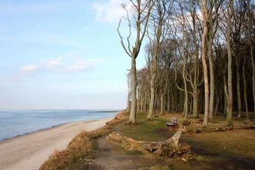 Sea Beach Forest Wide Tree Trees Baltic Sea
