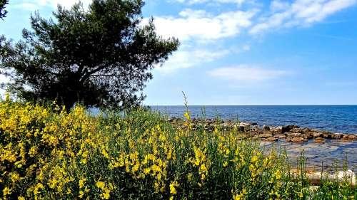 Sea Croatia Adriatic Sea Wave Rocky Blue