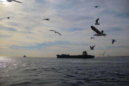 Sea Ocean Seagulls Ship Water Ships Seagull