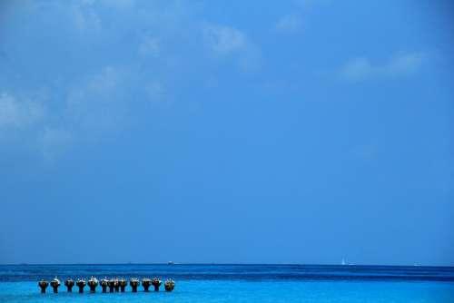 Sea Blue Nature Beach Landscape Ocean Sky Water