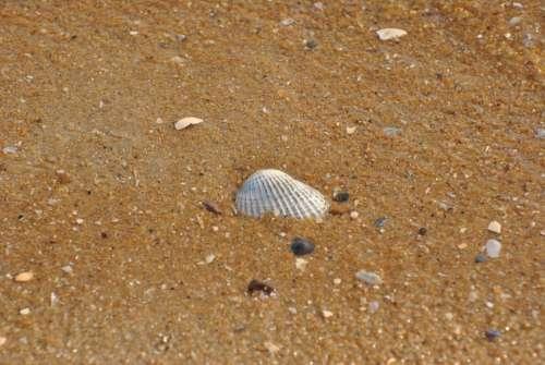 Sea Shell Shells Seashell Pattern Background