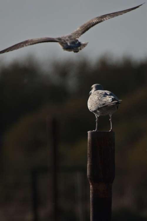Sea Birds Flight Perching Gull Abandoned