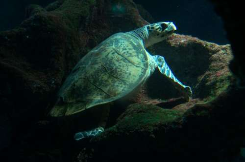 Sea Turtle Turtle Aquarium Sea Marine Life