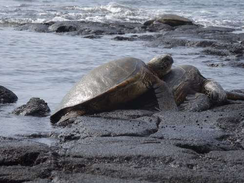 Sea Turtles Turtles Aquatic Animals Sea Love
