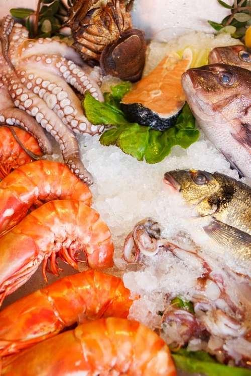 Seafood Food Healthy Sea Fresh Fish Restaurant