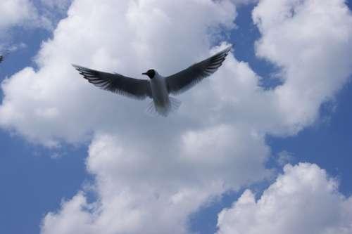 Seagull Birds Sky Nature Lake Sea Cloud