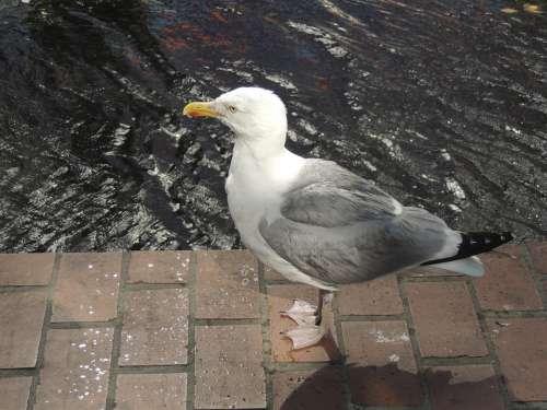 Seagull Bird Sea Nature Animal
