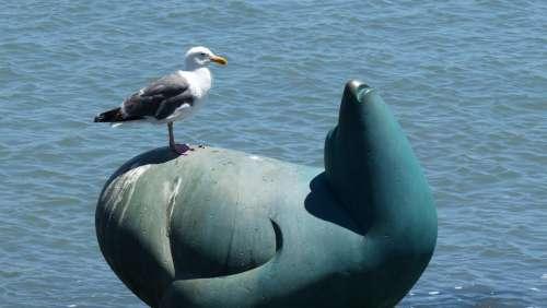 Seagull Seal Statue Beach
