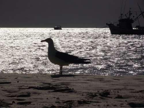 Seagull Bird Mar Beach