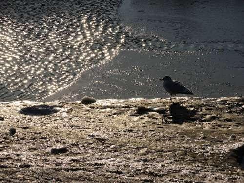 Seagull Dike North Sea