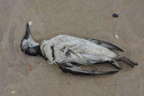 Seagull Dead Bird Bird Beach