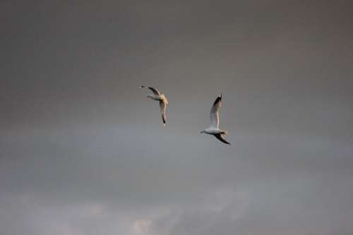Seagull Logs Bird Wings Outspread