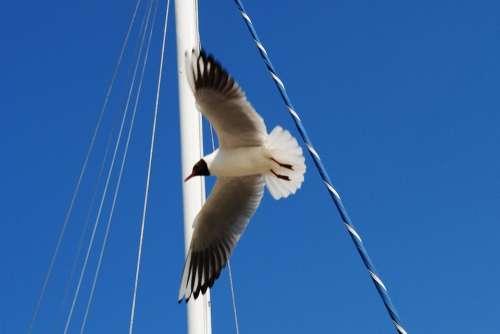 Seagull Sky Coast