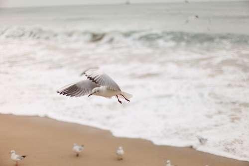 Seagull New Sea