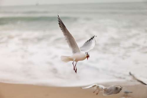 Seagull New Sea