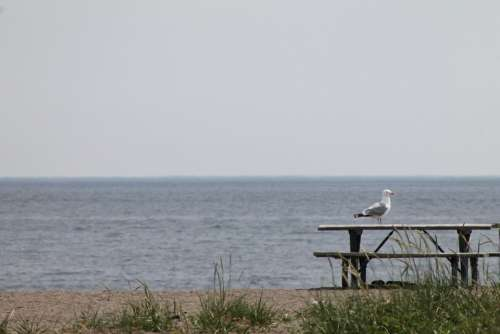 Seagull Gull Bird Picnic Table Lake Nature