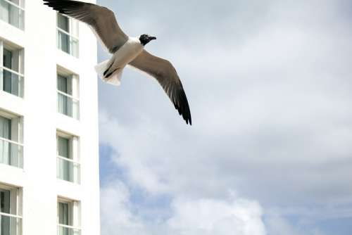Seagull Hotel Costa Sea Beach