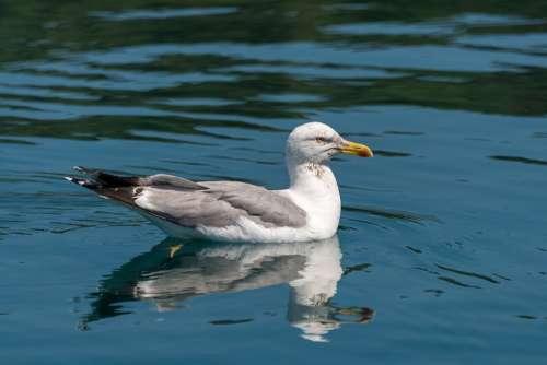 Seagull Bird Nature