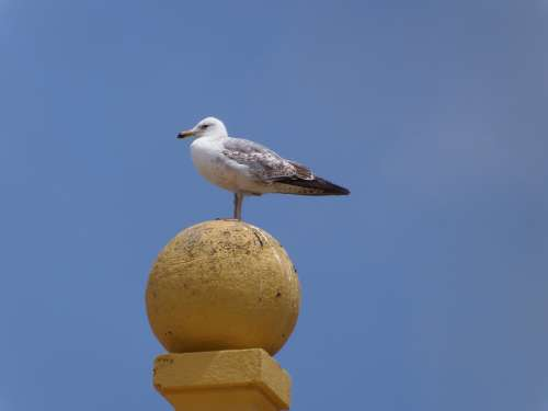 Seagull Birds Animals Sky Animal Bird Nature