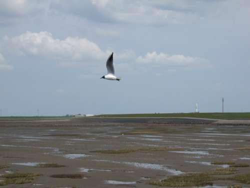 Seagull North Sea Coast Bird Beach