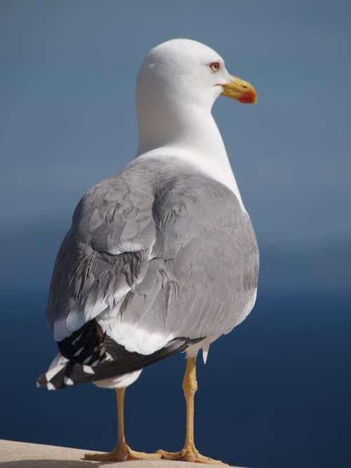 Seagull Bird Animal Water Bird Close Up