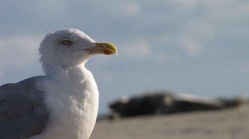 Seagull Beach Borkum North Sea