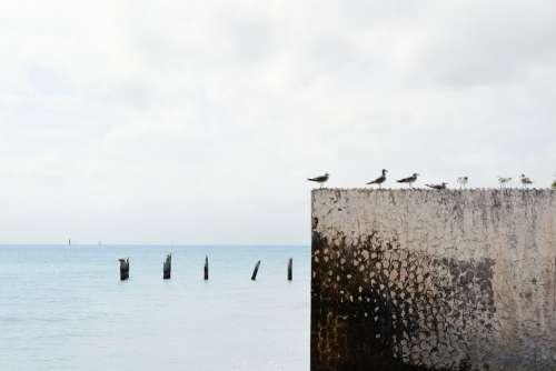 Seagulls Birds Gulls Wall Ocean Sea Grey Sky