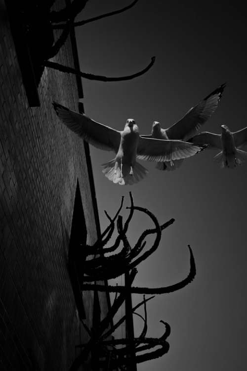 Seagulls Birds Animals Flight Wings