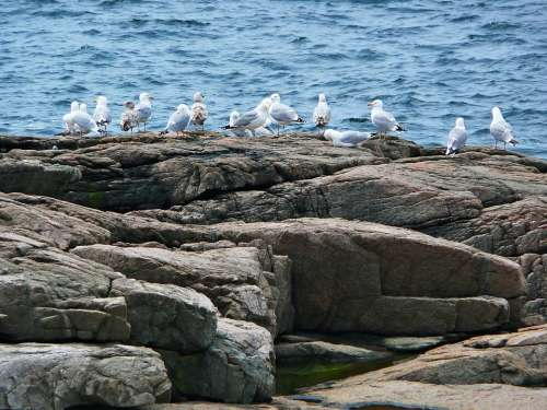 Seagulls Birds Shoreline Ocean Water Atlantic