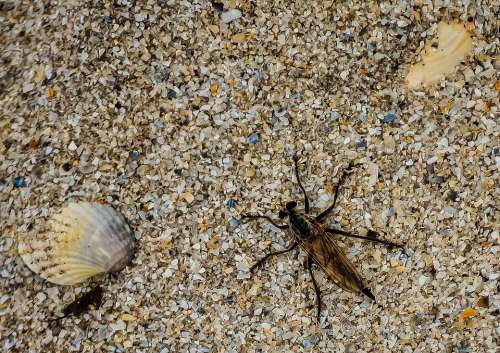 Seashell Insect Nature Wildlife Natural Sand