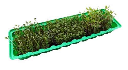 Seedlings Radix Cress Grow Germinate Bio Box