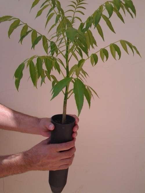 Seedlings Plants Trees