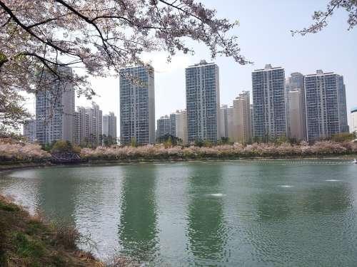 Seokchon Lake Lake Palace Spring Beoc Flowers