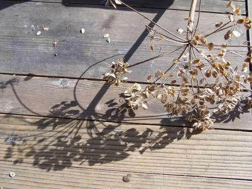 Shadow Filigree Plant Light