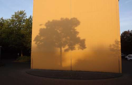Shadow Light Background Tree Evening Atmosphere