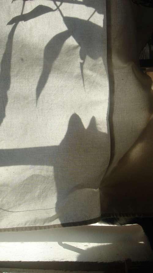 Shadow Sun Cat Light