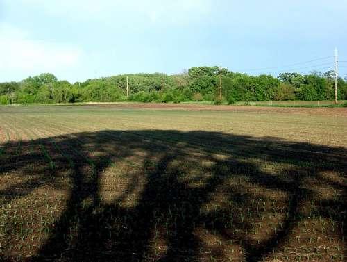 Shadow Corn Field Farm Dirt Plowed Plants